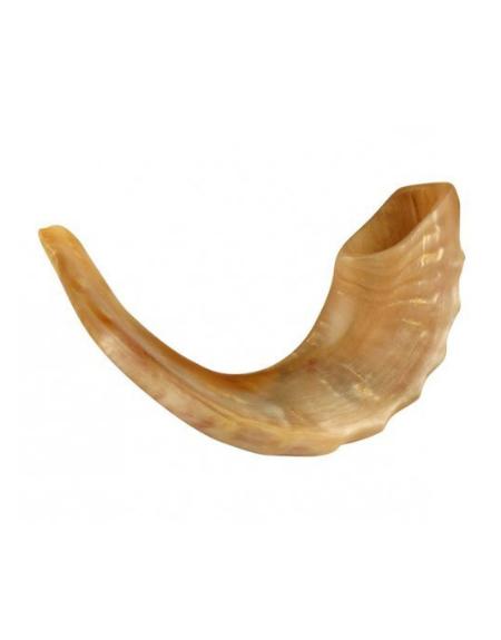 Shofar- corne bélier- taille moyenne